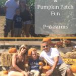 Corn Maze & Pumpkin Patch fun at P-6 Farms