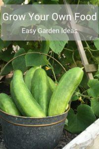 Grow Your Own Food - Easy Garden Ideas