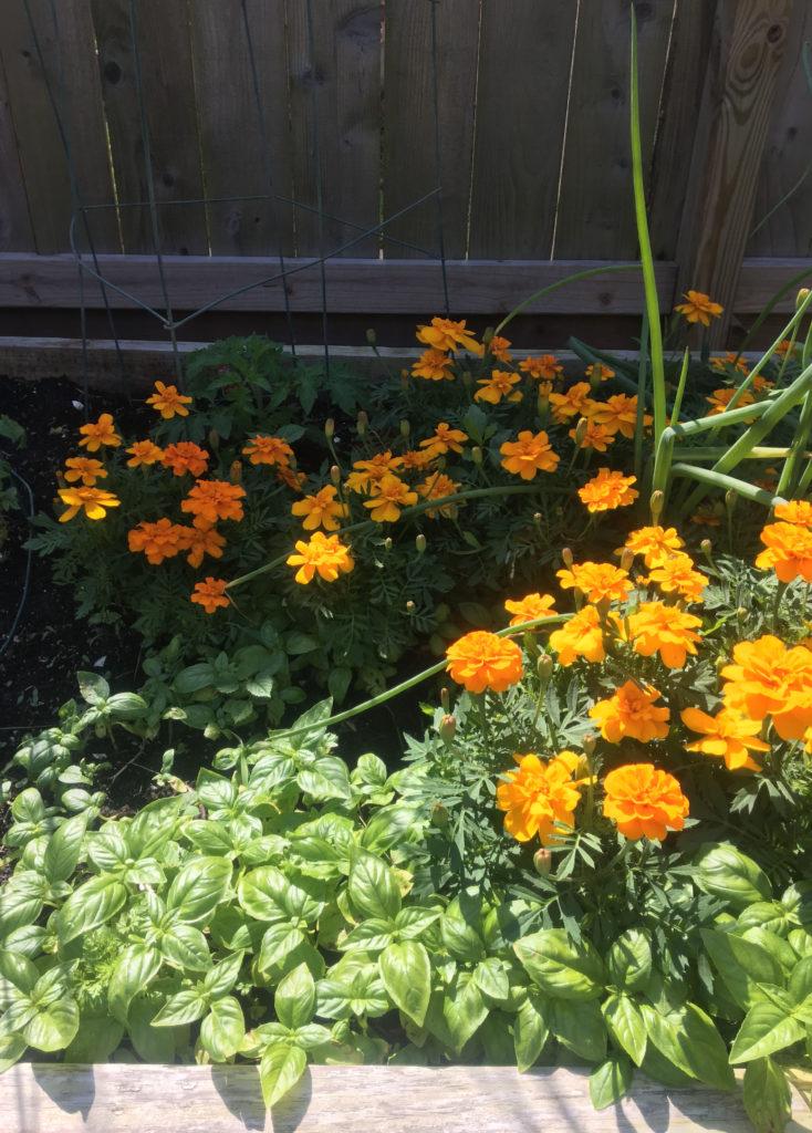 Easy Garden Ideas- Come Back Garden