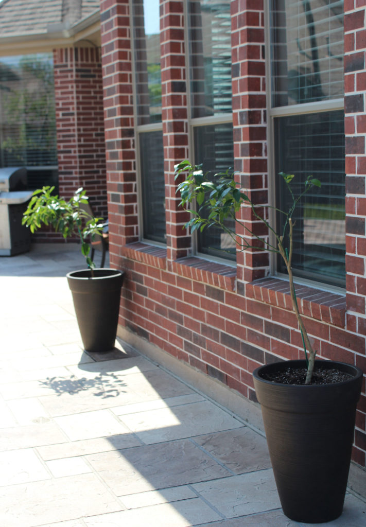 Lemon & Lime Container Gardening